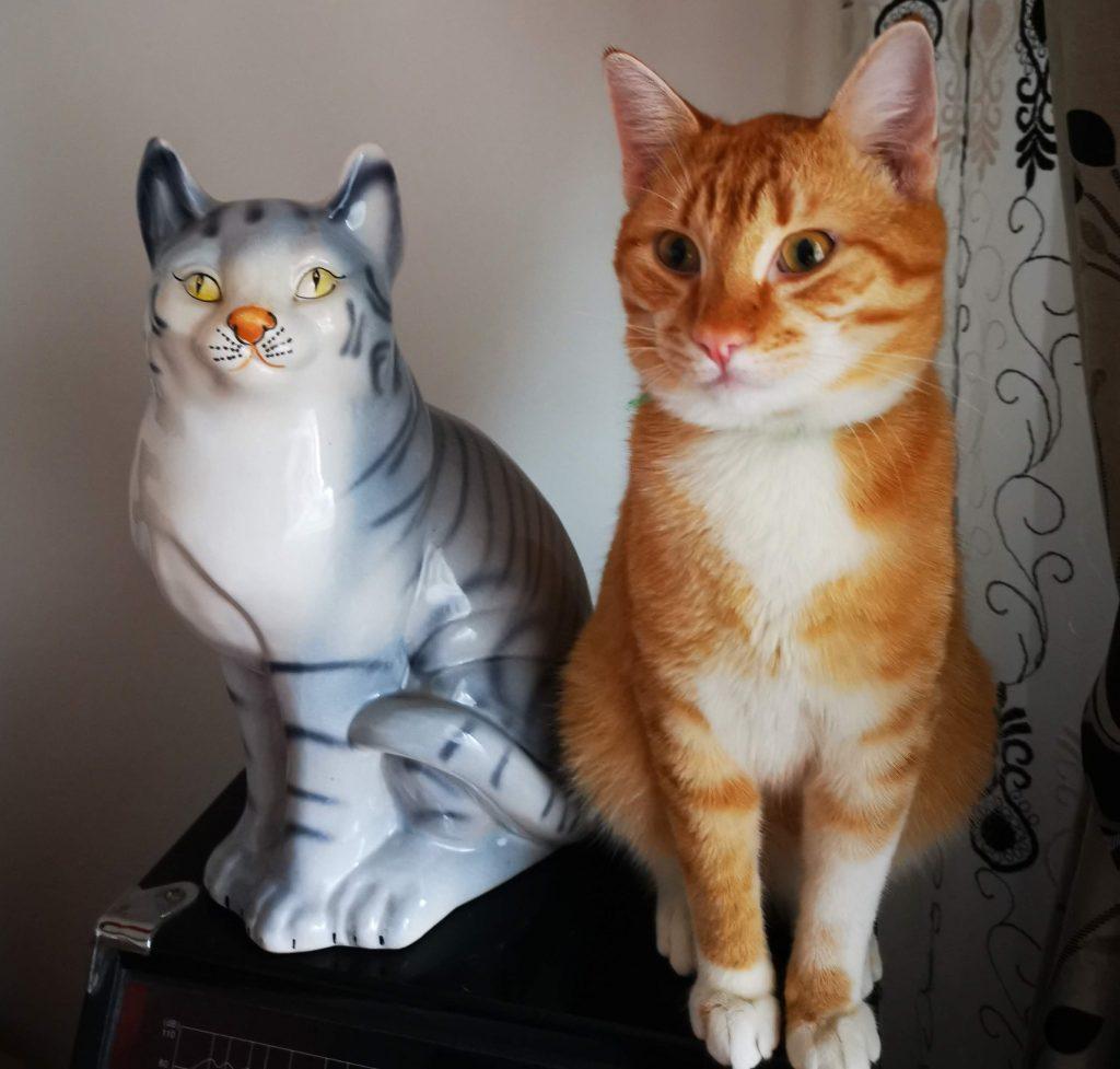 10 sunete pe care le fac pisicile si semnificatia lor scaled